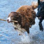 オダギリジョーがドラマ(NHK)『オリバーな犬、 (Gosh!!) このヤロウ』で犬役に!