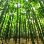 京都の嵐山は楽しみ方が沢山ある!歴史的建造物もおすすめ!